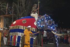 Шествие слонов с зубом Будды проходит на Шри-Ланке