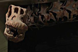 Учёные рассказали о самом большом в мире динозавре