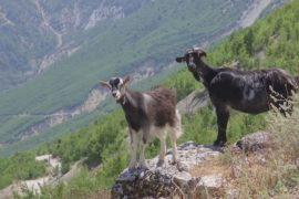 Малоизвестную албанскую деревню откроют для туристов