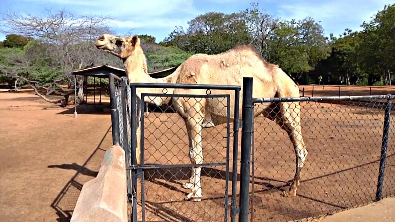 Из зоопарка Венесуэлы украли животных, чтобы их съесть