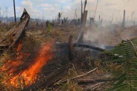 В Бразилии пытаются защитить леса Амазонии от пожаров и вырубки