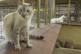 Малазийский приют «Ноев ковчег» стал прибежищем для 1000 животных
