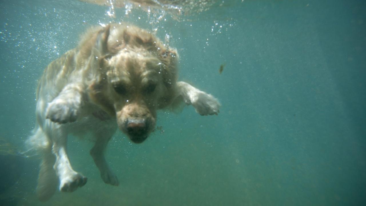 Пляжное кафе для собак организовало собачий заплыв