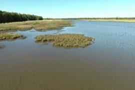 Прибрежные болота Австралии могут исчезнуть через 80 лет