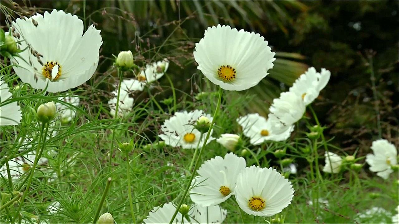 Сад Кенсингтонского дворца усыпали белые цветы в память о Диане