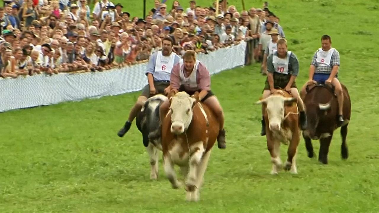 Гонка на быках собрала в Баварии тысячи зрителей