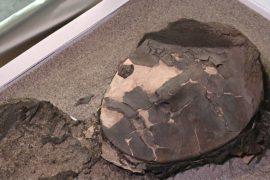 Изменение климата угрожает самым древним в мире мумиям