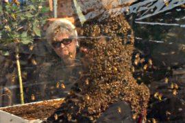 Канадец просидел больше часа с пчёлами, покрывающими всю голову