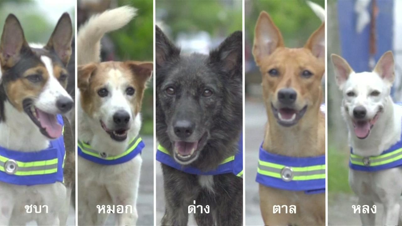 Бродячих собак в Таиланде планируют превратить в охранников