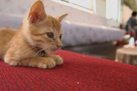 Зачем бездомные кошки заполонили поезд в Японии