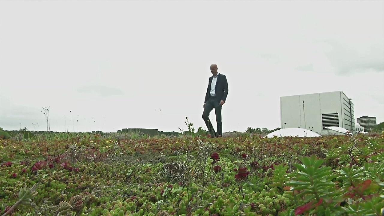 В Нидерландах создали «умные зелёные» крыши