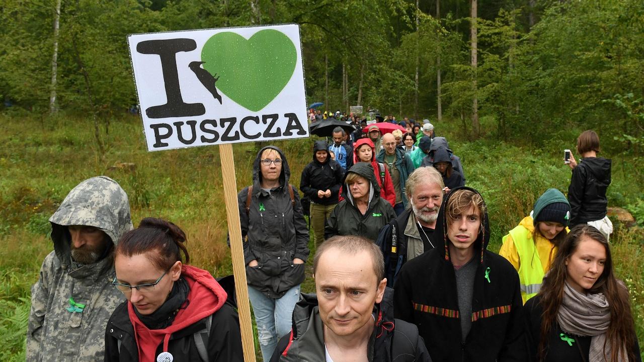 В Польше протестуют против непрекратившейся вырубки Беловежской пущи