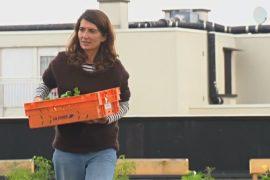 Работники парижской почты выращивают овощи на крыше