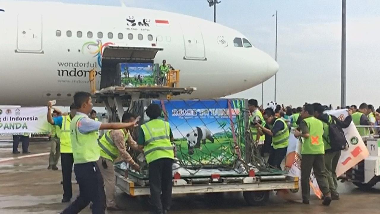 Две большие панды прибыли в Индонезию из Китая