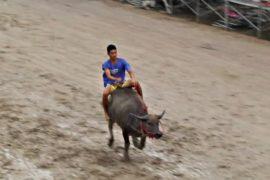 Зрелищные гонки на буйволах: тайцы отмечают начало сбора урожая