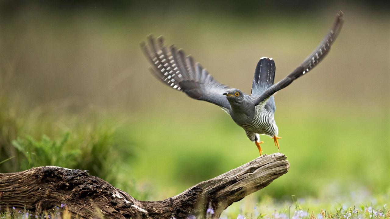 В Польше началось осеннее кольцевание перелётных птиц