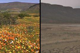 Засуха лишила ЮАР цветущей долины