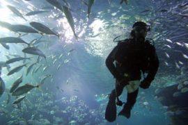 В Швейцарии открывается крупнейший в Европе пресноводный аквариум