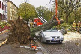 В Германии устраняют последствия урагана «Герварт»
