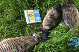 Эффективная рыбалка с Dry Blooder