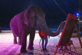 Картины цирковой слонихи выставили на аукцион