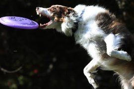 Собачий фестиваль Woofstock: показ мод, шоу талантов и красная дорожка