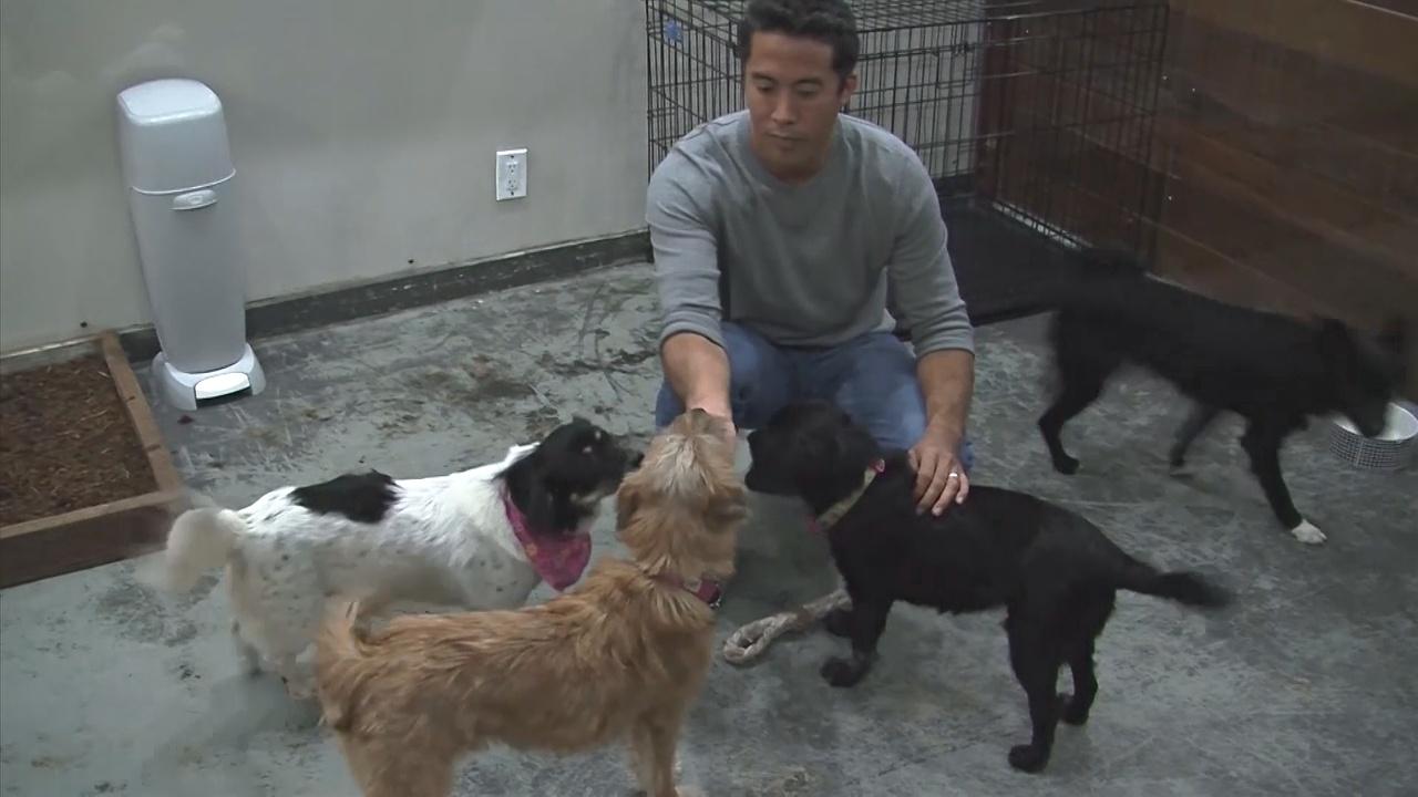 Американец ездит в Азию спасать собак