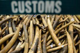 Белый дом заморозил разрешение на ввоз в США трофеев из частей тела слонов