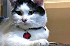 Кот из приюта стал дипломатом британского посольства в Иордании