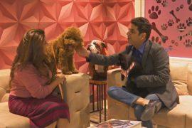 Первый роскошный отель для собак в Индии набирает популярность