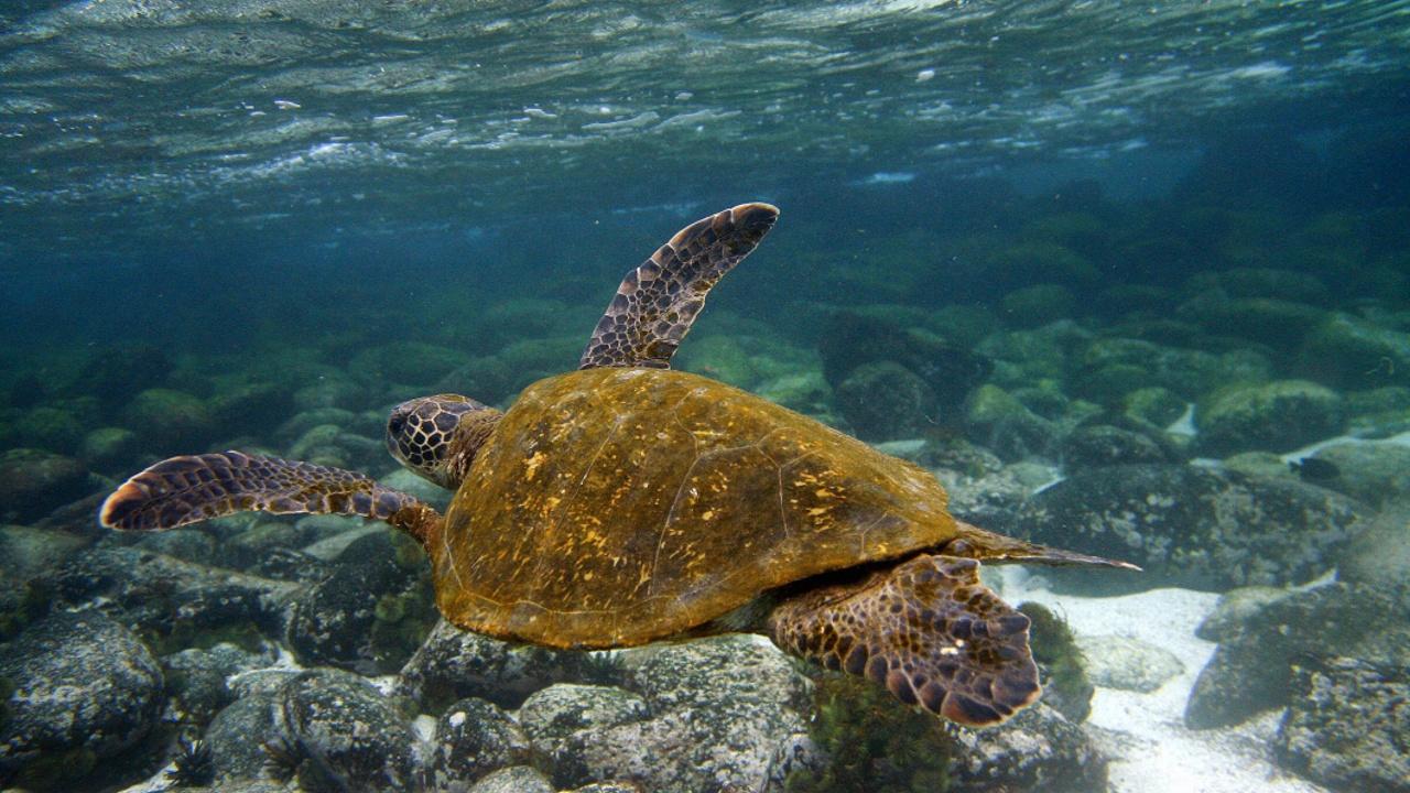 Мексика создала крупнейший в Северной Америке морской заповедник
