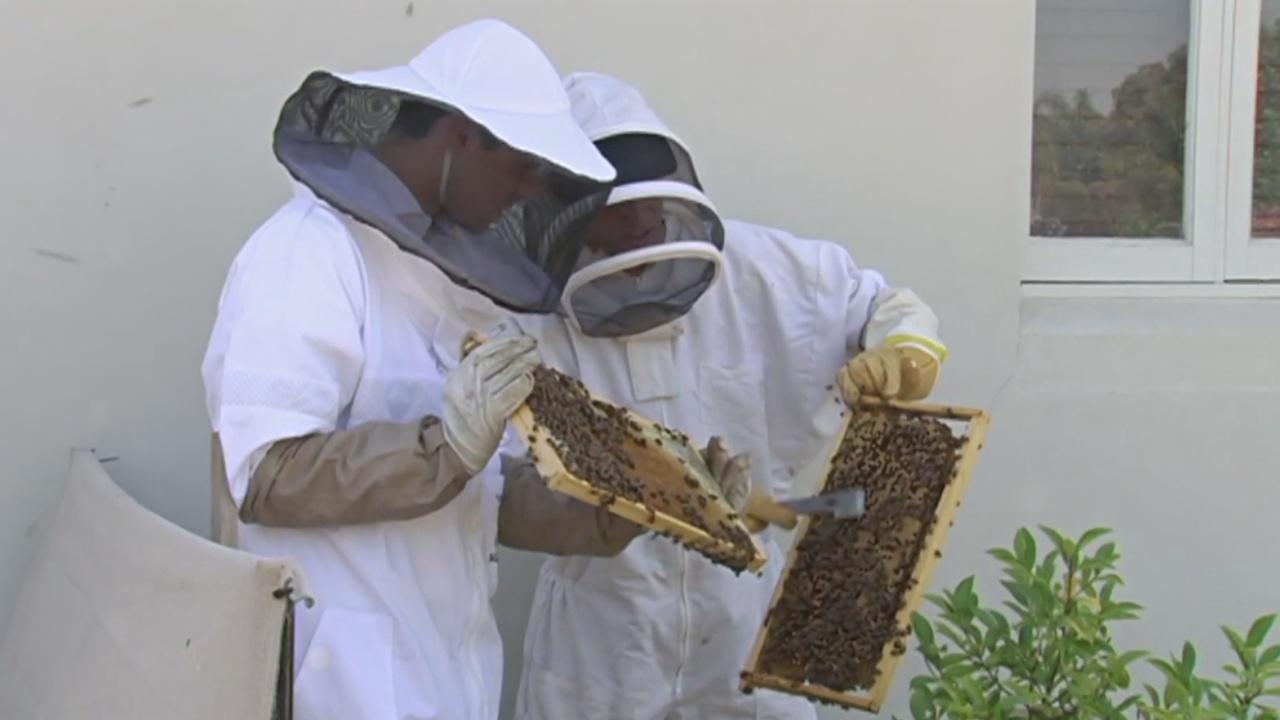 Австралийцы разводят пчёл возле городских зданий
