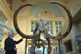16000-летний скелет мамонта выставят на аукцион во Франции