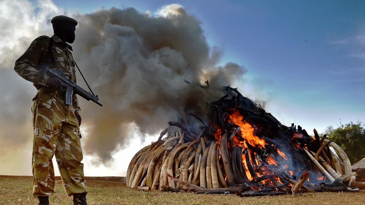 СИТЕС: африканские слоны — по-прежнему под угрозой исчезновения