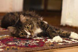 Как почистить ковёр ручной работы