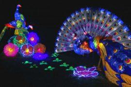 Светящиеся драконы и лотосы украсили Антверпенский зоопарк