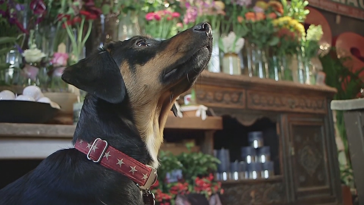 Собаки привлекают клиентов в британские кафе и магазины