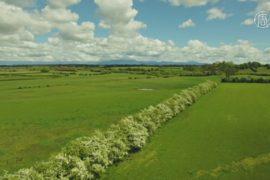 Живые изгороди из боярышника восстанавливают на острове Тасмания