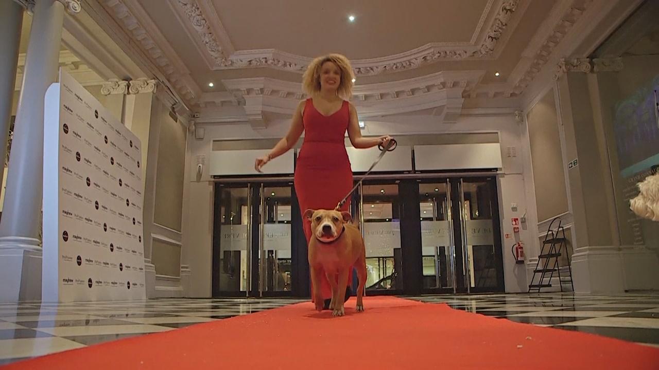 Рождественский вечер для гостей с собаками устроили в Лондоне