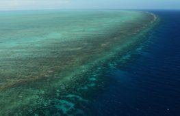 Учёные придумали, как «отремонтировать» Большой Барьерный риф