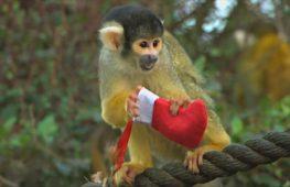 Животные празднуют Рождество в Лондонском зоопарке
