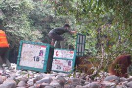 Орангутанов острова Калимантан выпускают на волю