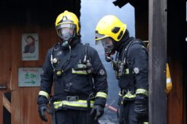 Лондонский зоопарк снова открылся после пожара