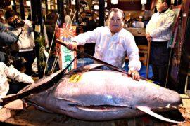Тунца продали за $320 тысяч на новогоднем аукционе в Токио