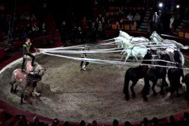 Клоуны, акробаты и жонглёры со всего мира съехались в Будапешт