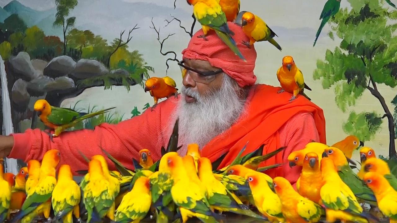 За что индийский парк попугаев попал в Книгу Гиннесса