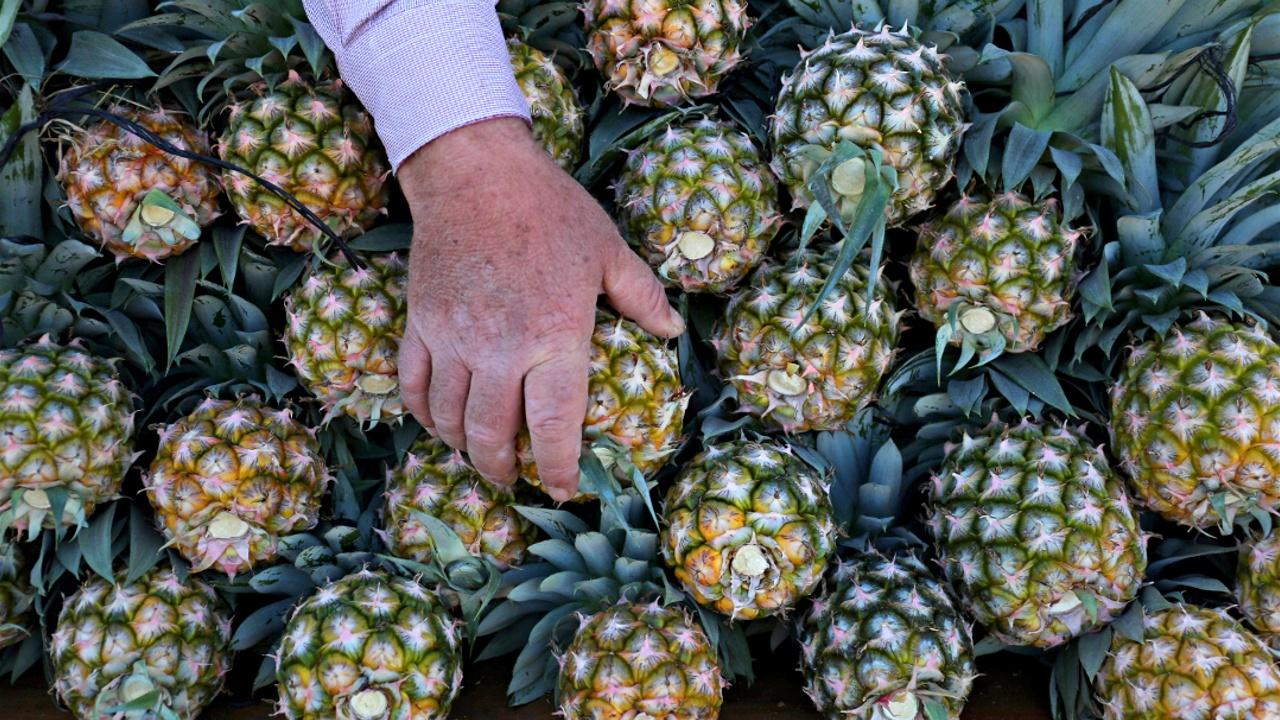Кокаин под видом ананасов: 745 кг наркотика изъяли в порту Лиссабона