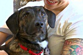 В Нью-Йорке открылось первое кафе, где можно посидеть с собакой