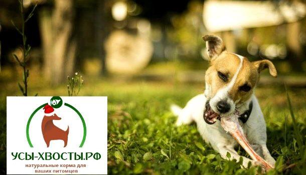 Мясо для собак – полноценный корм для домашних питомцев
