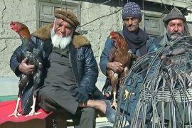 Увлечение птицами помогает афганцам забыть о войне
